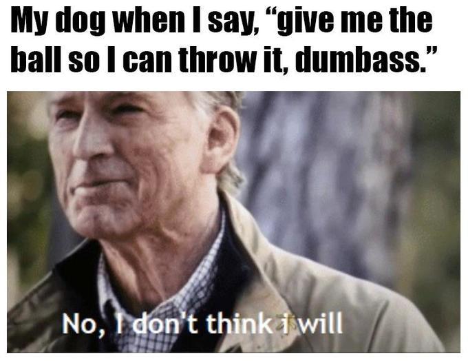 Dog give me the ball